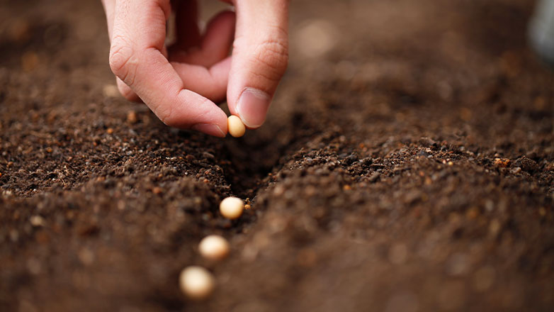hand placing multiple seeds in dirt along a row