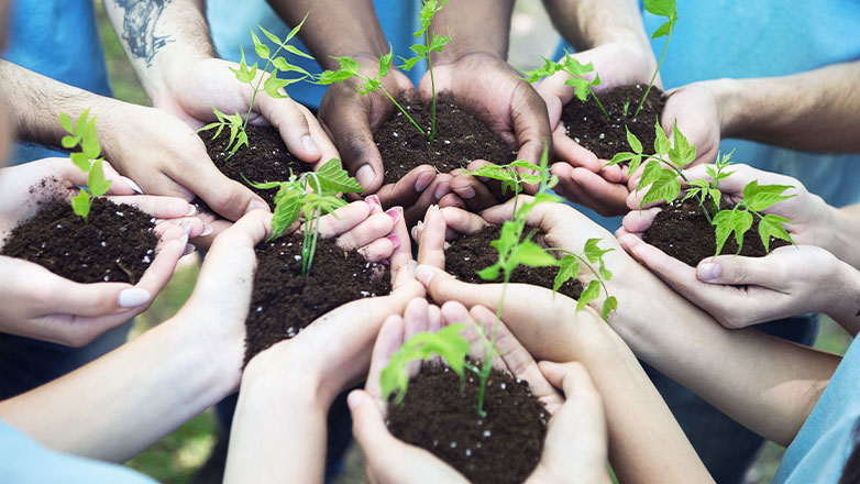 several hands grouped together each holding dirt and a small plant